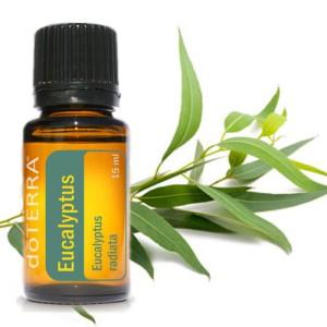 eukalyptus detoxikacia pluc
